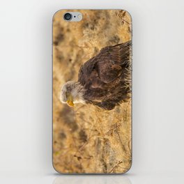 Bald Eagle iPhone Skin