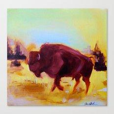 Little Buffalo Canvas Print