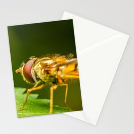 Mimetic Fly On A Leaf In Garden, Fly Insect, Macro Photography, Minimalism, Nature Details, Wall Art Stationery Cards