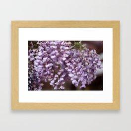 Spring - Wisteria Framed Art Print