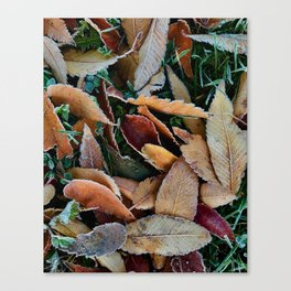 frosty mornings Canvas Print