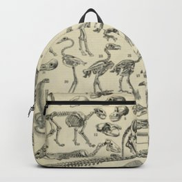 Skeletal Anatomy Chart Backpack