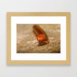 Millepede Framed Art Print
