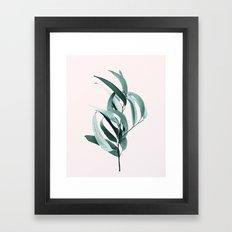 Eucalyptus II - Australian gum tree Framed Art Print