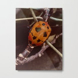 Cotton Harlequin Bug Metal Print