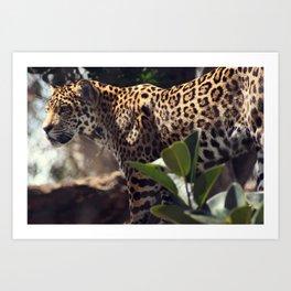 jaguar stare Art Print