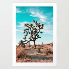 Joshua Tree - California Living Art Print