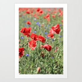 poppy flower no9 Art Print