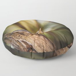 Northern Nuthatch Floor Pillow