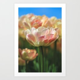 Colorful Tulips in Coral,Yellow and Green Art Print