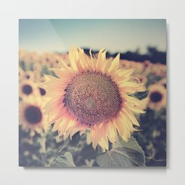 """Sunflowers"" Vintage dreams. Square Metal Print"