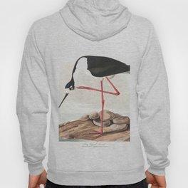 Long legged avocet, Birds of America, Audubon Plate 328 Hoody