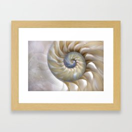 Nautilus Shell Framed Art Print
