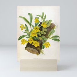 Vintage Yellow Orchids Log Lindenia Collection Mini Art Print