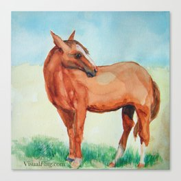 A Good Day for a Horse Canvas Print