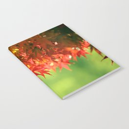 Colorful Red Japanese Maple In Fall Photography Notebook