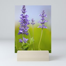 Sage Plant Summer Garden Mini Art Print