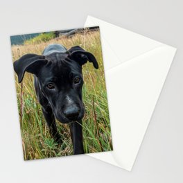Doggy in the Field // Natural Filter Hiking by Rustic Abandoned Log Cabin Summit Colorado Stationery Cards