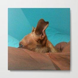 MADiSON (shelter pup) Metal Print
