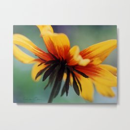 Bee's Eye view of a Black-eyed Susan Metal Print