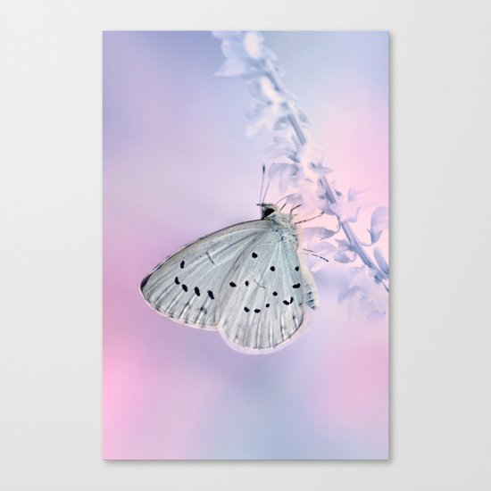 Butterfly Macro 59 Canvas Print