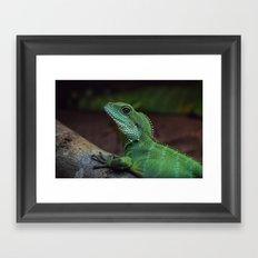 Lizzard Framed Art Print