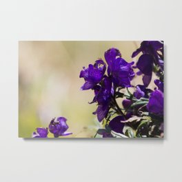 Lupin flowers on the Pyrenees Metal Print