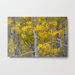 Birch Trees in the Autumn Metal Print
