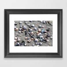 Shells Framed Art Print