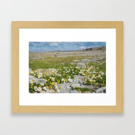Irish Daisies Framed Art Print