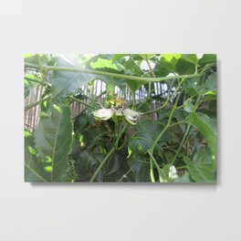 Passionfruit flower Metal Print
