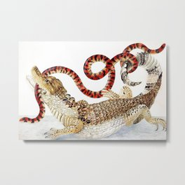 Spectacled Caiman and a False Coral Snake by Maria Sibylla Merian c.1705-10 // Wild Animals Decor Metal Print