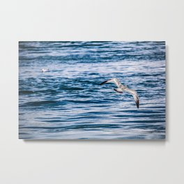 Bird flying across the Niagara river Metal Print