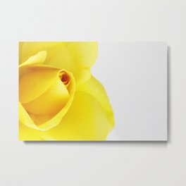 Bright Yellow Rose on a White Background Metal Print