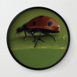 Ladybird on a Flower, macro photography, home, still life, fine art, animal love, nature photo Wall Clock