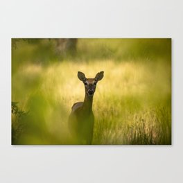 Keeping Tabs - Watchful Young Deer Through Tree Leaves in Wyoming Canvas Print