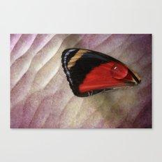 Wing Drop Canvas Print