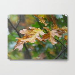 Brown Leaves Metal Print