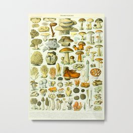 Mushroom Vintage Scientific French Language Encyclopedia Lithograph Mushrooms Labeled Diagrams Metal Print
