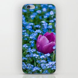 Pink Tulip in the blue iPhone Skin