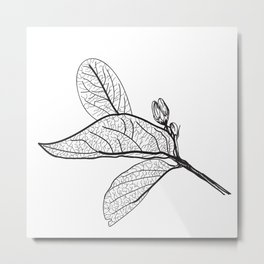 Leaves contours on a white background. vector Metal Print