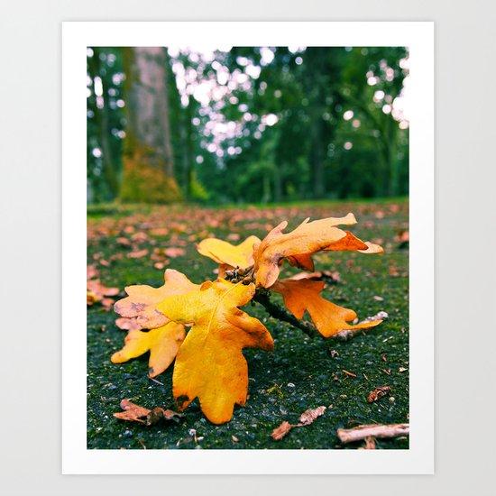 Autumn leaf fallen Art Print