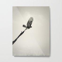 Red-Tail Hawk on Columbia River, Washington, Bird, Wildlife Metal Print