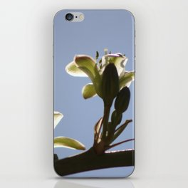 Ivory Hesperaloe Parviflora Flower Against Desert Sky iPhone Skin