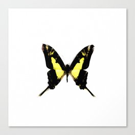 TropicalYellow Butterfly Painting Canvas Print