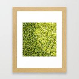Milkly Oat  Framed Art Print