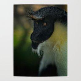 Diana Monkey Poster