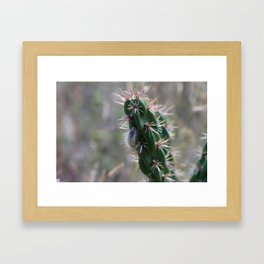 Fuzzy Caterpillar on Cactus 2 Framed Art Print
