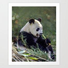 Panda breakfast Art Print