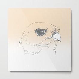 Falcon Focus Metal Print